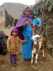 A mother grazing her goat while taking care of her children in Nepal (IFPRI-IMAGES) Tags: nepal woman goats agriculture gender ownership gaap asset irri ifpri dubaripurvillage siddarthanagar