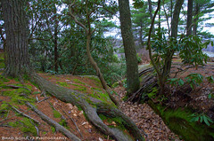 Cook Forest (B.G.Schultz-Photography) Tags: trees nikon cookforeststatepark d7000