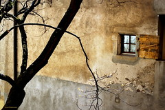 golden wall (overthemoon) Tags: wood lake tree window stone gold schweiz switzerland interestingness spring warm suisse sunny unescoworldheritagesite explore vineyards shutter svizzera lman vignoble 184 lavaux romandie judastree saintsaphorin thursdaywalk arbredejude judasbaum bestofr utata:project=tw366 cercissilicastrum