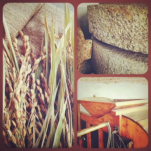 #rice #riso #vre1 #safarisaia