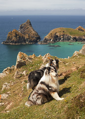 Kynance cove (Peter Trott) Tags: sea southwest dogs collie cornwall cove sheltie cliffs coastalpath kyance
