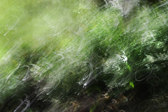 DSC_1114 (lioncourt7) Tags: longexposure trees sunlight lightpainting abstract green forest woods experimental surreal cameratoss lightplay experimentalphotography intentionalcameramovement
