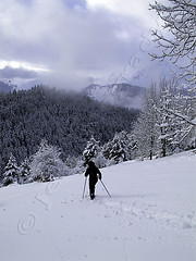 LS_RAQU.370 : snowshoeing in the Pyrenees (photonogrady) Tags: winter mountain snow tree nature sport forest montagne landscape outdoor hiking hiver rando neige paysage foret arbre randonnee