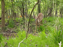 P5063788 (Raccoon Photo) Tags: flowers trees friends ohio wild summer lake cute green nature animals creek river walking fun spring furry squirrel squirrels friend funny stream hiking walk nuts may handsome peanuts hike deer friendly peanut wildanimal parma nut reservation walkinginnature metropark metroparks wildsquirrel parmaohio bigcreekparkway hikinginnature stateroadpark