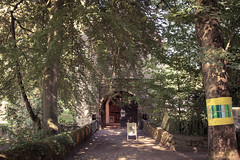 IMG_3570.jpg (noodles_do) Tags: sommer landschaft dortmund spaziergang rombergpark löttringhausen tierwelt canon60d blumenundpflanzen