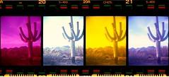 Saguaro (K e v i n) Tags: arizona cactus southwest film nature analog 35mm outside outdoors desert scan dirtroad sonorandesert sprockets marana fujisuperiaxtra400 sprocketholes southernarizona nishika colorfilters fujis400 fourlenses tortolitas nishikan8000 tortolitamountains epsonv500 lomographydigitaliza