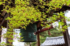 Daikaku-ji III (Douguerreotype) Tags: shrine temple buddhist kyoto japan green tree bell bokeh leaves acer maple