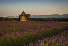The Fairy Tower (pixellesley) Tags: sunset summer hot building tower woodland landscape golden evening sundown bees lavender peaceful silence tranquil folly scented lesleygooding