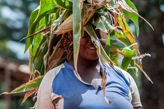 Forages in Tanzania: making trade-offs