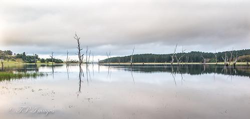 Lake Tinaroo - Pano