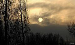 Sol de Invierno (Franco D´Albao) Tags: francodalbao dalbao fuji invierno winter sol sun tristeza sadness frío cold melancolía melancholy oscuridad darkness pálido pale internationalflickrawards
