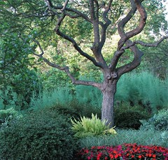 The Tree (Cher12861) Tags: cantignygardens wheatonillinois summer2016 myfavoritetreetophotographthere landscape green flowers bushes branches shrubbery nature beauty
