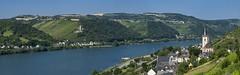 Weinstadt Lorch am Rhein und Burgruine Frstenberg (Frawolf77) Tags: burgruine burg frstenberg rheinsteig lorch weinstadt rhein rhine mittelrheintal panorama
