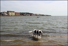 West Kirby Wirral  230816 (17) (over 4 million views thank you) Tags: westkirby wirral lizcallan lizcallanphotography sea seaside beach sand sandy boats water islands people ben bordercollie dog beaches reflections canoes rocks causeway yachts outside landscape seascape