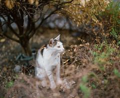 (C.Kunta) Tags: 120  iso80 kodakppn160 pentax67ii slr cat