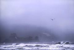 Above It All (David Badke) Tags: westport washington usa us ocean beach fog