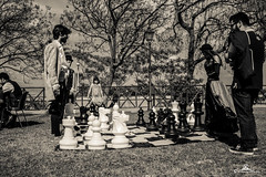 playng chess (89lilly) Tags: scacchi blackandwhite grey black white play playing giocare chess big people trees wind prato park grandjatte event cagliari sardinia italy explore italia canon canon550d love photography attimi