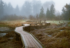 The Walk (briantolin) Tags: portmoody britishcolumbia vancouver forest fog boardwalk path
