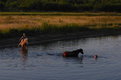 ... the river is everywhere at once ... (IcarusBlue) Tags: girls horses bathing sunset field