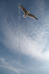 Vlissingen (gazoumou) Tags: sylvievannerum gazoumou vlissingen paysbas flessingue zeeland landscape paysage oiseau bird nature nuage cloud europe ciel sky sea zee mer seagull travel beach plage voyage bateau boat merdunord