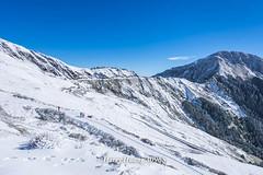 Harry_30965,,,,,,,,,,,,,,,,,Winter,Snow,Hehuan Mountain,Taroko National Park,National Park (HarryTaiwan) Tags:                 winter snow hehuanmountain tarokonationalpark nationalpark     harryhuang   taiwan nikon d800 hgf78354ms35hinetnet adobergb  nantou mountain