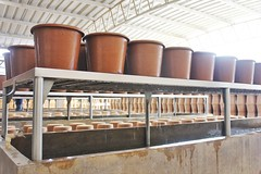 Ecofiltro pots in a row - Charlie on Travel (CharlieOnTravel) Tags: ecofiltro guatemala tour sustainable antigua water filter pots eco