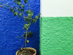 Asilah, Morocco (Lindsay Shanley) Tags: morocco asilah color contrast walls plant outdoors africa