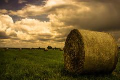 DSCF1044 (Windbe) Tags: schwedt oder nationalpark unteresodertal brandenburg polder uckermark natur nature stroh wiese flusauen landschaft landscape naturschutz flora fauna strohballen wolken flus