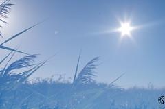 Euh soleil - lune? (mailyse.bellanger) Tags: soleil lune roseaux ensemble moon sun nature estuaire gironde
