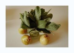 stilllife3 (lux fecit) Tags: paris pears sage kitchen homegrown