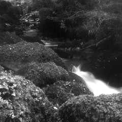Kennall Vale [Gnome Pixie] (Mr B's Photography) Tags: long exposure film gnome pixie box camera fomapan paranol blackandwhite river stream woods kennallvale