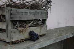 Vines in Germanlands (jakoboberle) Tags: vines reben germany deutschland german deutsch blackforest schwarzwald landscape landschaft fruit frucht wood holz