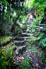 Green Stairs (lukemarkof) Tags: park trees light shadow brown mountain plant black tree green art wet forest canon dark fun happy grey march nationalpark moss woods stream exposure track play view outdoor walk low culture style australia funky excited falls special exotic tasmania myrtle mystical depth interest challenging 2013 60d myrtleforest