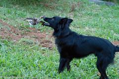 Goncalves_091@20130329.jpg (Br@hl) Tags: brasil canon outdoors mg 7d gonçalves brhl canon7d goncalvesmg brunoahlgrimm