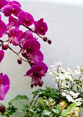 DSC_7112 (Away Chen) Tags: china orchid flower nikon shanghai away chen 1755  1755f28 nikond80