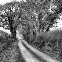 A little winding country road. (Edward Dullard Photography. Kilkenny, Ireland.) Tags: road kilkenny ireland painterly camino path photoart emeraldisle irlanda ierland bestportraitsaoi bestcapturesaoi edwarddullardphotographykilkennycityireland 9deanstreetkilkenny