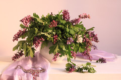 Corydalis: Spring Ephemeral (panga_ua) Tags: pink stilllife greenleaves white art classic love nature mystery composition scarf canon spectacular necklace spring artwork purple artistic availablelight ukraine poetic fresh creation fabric april jug mauve imagination drape natalie wildflowers arrangement springflowers tabletop corydalis bodegon naturemorte panga artisticphotography rivne naturamorta artphotography crestedlark sharpfocus forestflowers earlybloomers springephemeral ephemerals pickedflowers colorvariation woodentabletop symbolofspring whitetabletop  nataliepanga pastelsbackground transpositionofair ephemeralairiness