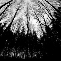forest 0595 (s.alt) Tags: wood tree nature silhouette forest woodland blackwhite selva holz wald baum fort bois bosco foresta elbosque lafloresta forst gehlz natureunveiled