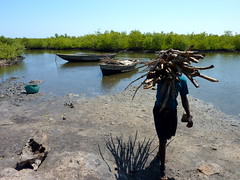Cutting of Mangroves - Haiti (UNEP Disasters & Conflicts) Tags: haiti conservation erosion un disaster unitednations mission conflict environment mangroves drr development climatechange floods ecp csi unep sdg deforestation disasters cdi renewableenergy mdg conflicts desertification sustainabledevelopment overfishing disasterriskreduction greeneconomy developmentprojects cotesudinitiative southdepartment pcdmb environmentalcooperationforpeacebuilding