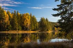 Autumn leaves, Numedalslågen (Norway)-1940.jpg (Stein Arne Jensen) Tags: automne autumn buskerud canon60d fluss herbst høst kongsberg labro laugerudsundet norway otoño steinarnejensen elv rio river rivière no sigma1770mmf284dcmacroos nogru