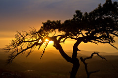 Bonsai Sunset (Sugar Mtn Photography) Tags: sunset silhouette pine northcarolina bonsai blueridgeparkway flatrock sunstar linvillegolfclub daleking sugarmountainphotography