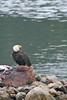 Alaska Adventure Vacation - Sitka 23
