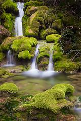 Entre musgos (La ventana de Alvaro) Tags: musgo agua verdes urederra afiaie