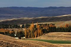 Shadow and Colour (Tones Corner) Tags: autumn countryside centralotago poplars otagonz nzscene nzrural