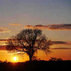 Dunchurch Sunset (rogbi200) Tags: uk sunset tree may warwickshire dunchurch lumixgvario45200f4056