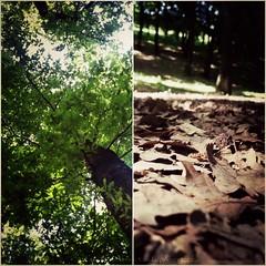 Dall'alto verso il basso (ClaudiaNPhoto) Tags: roma alberi natura bosco fogkie flickrandroidapp:filter=none