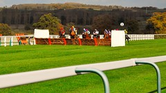 Towcester Racecourse (standhisround) Tags: uk trees horses grass fence northampton rail racing hurdles racecourse thoroughbred equine towcester racehorses nationalhunt
