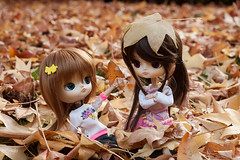 Leaves and more Leaves (Pyochi) Tags: autumn doll dal sanrio pullip buu cinamoroll leeke leekeworld rewigged iplehouse adaw lizbel cinnita
