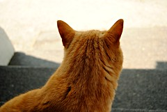 Thinking (ntwphotography) Tags: orange cute nature cat fur photography tabby ears tigger