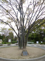 Old tree in the park (seikinsou) Tags: park tree fountain japan spring picnic cherryblossom osaka sakuramochi